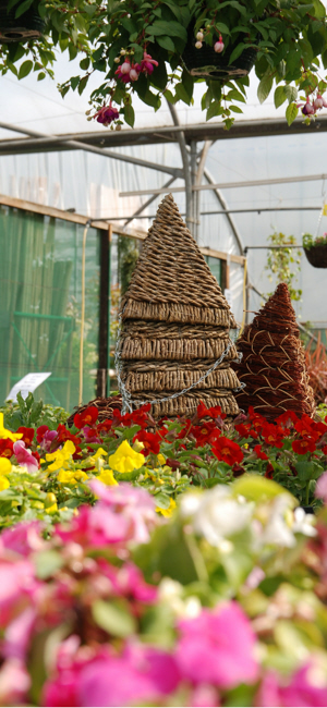 newent plant centre herefordshire